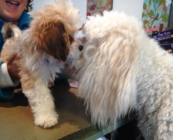 Georgie giving Bailey lots of kisses, poor Bailey!