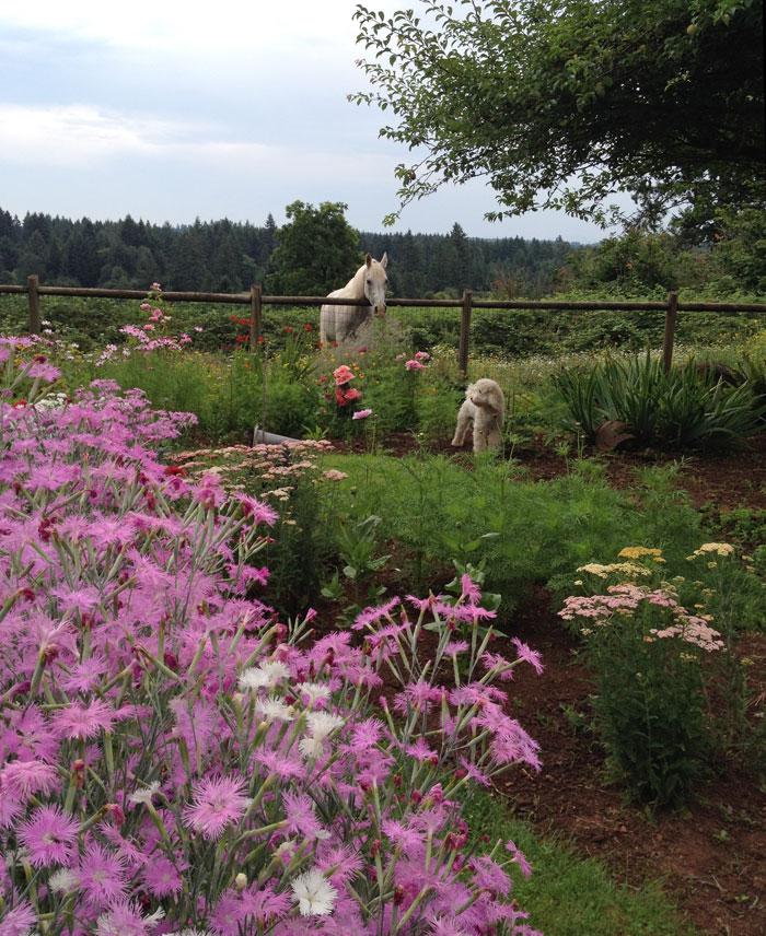 Blenda Studio Cut Flower Garden