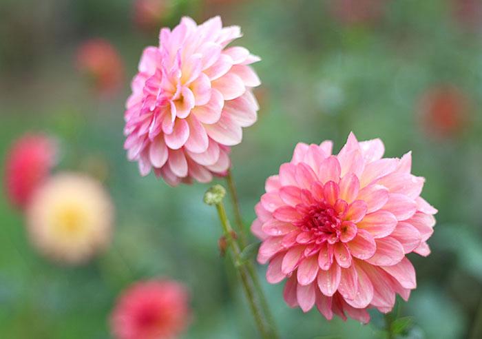 Blenda Studio Flower Garden