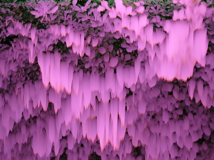 6_melting shrub.JPG