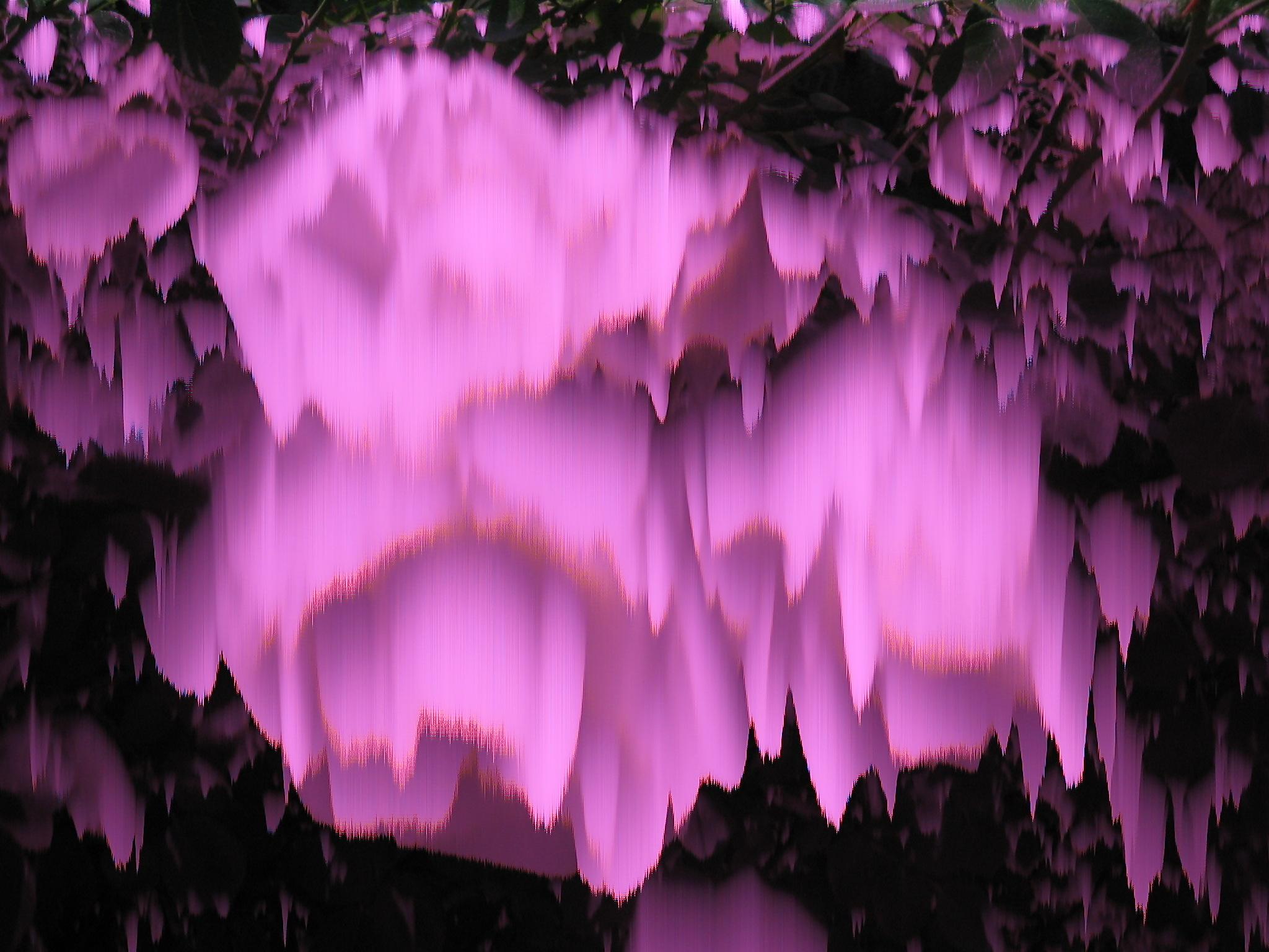 cm_whiteflowers.JPG