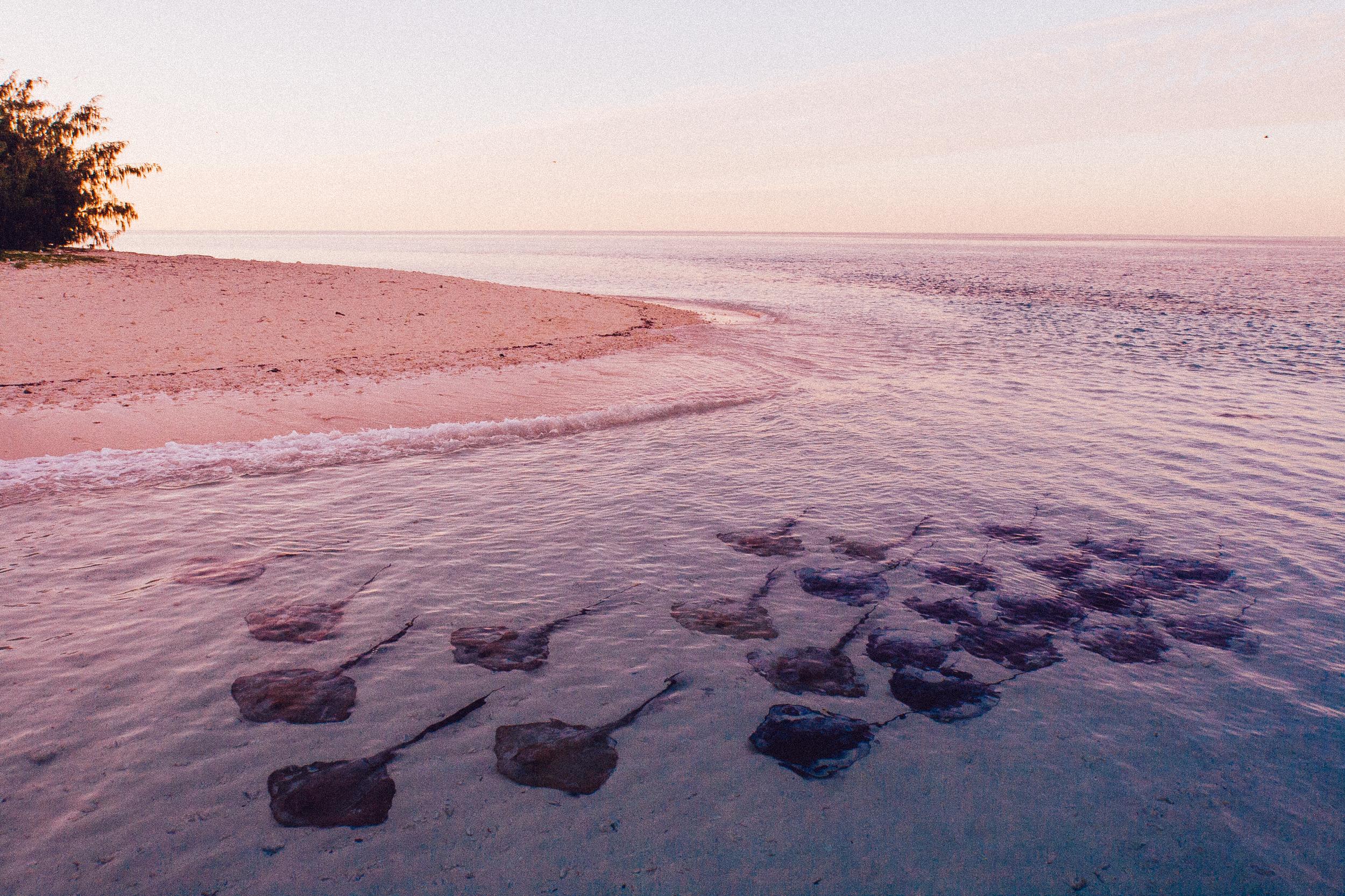 Herron Island