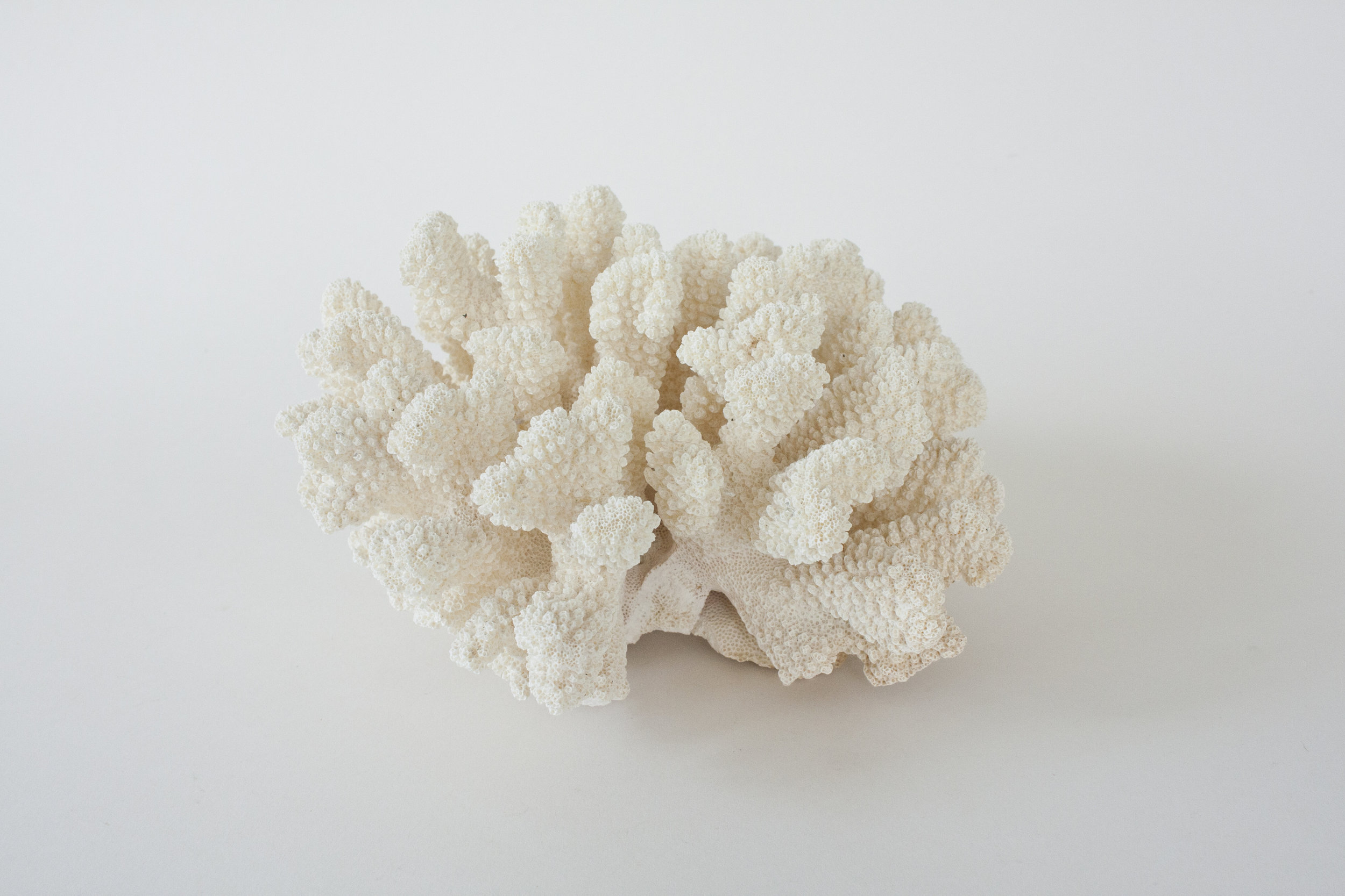 """coral 