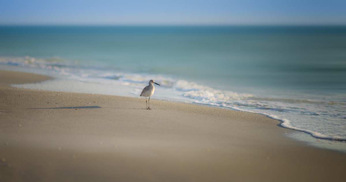 Alone At The Beach
