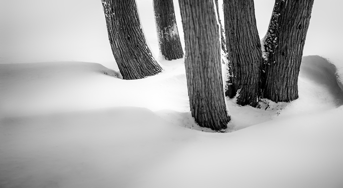 HUSHED - Snow and Cedars BW