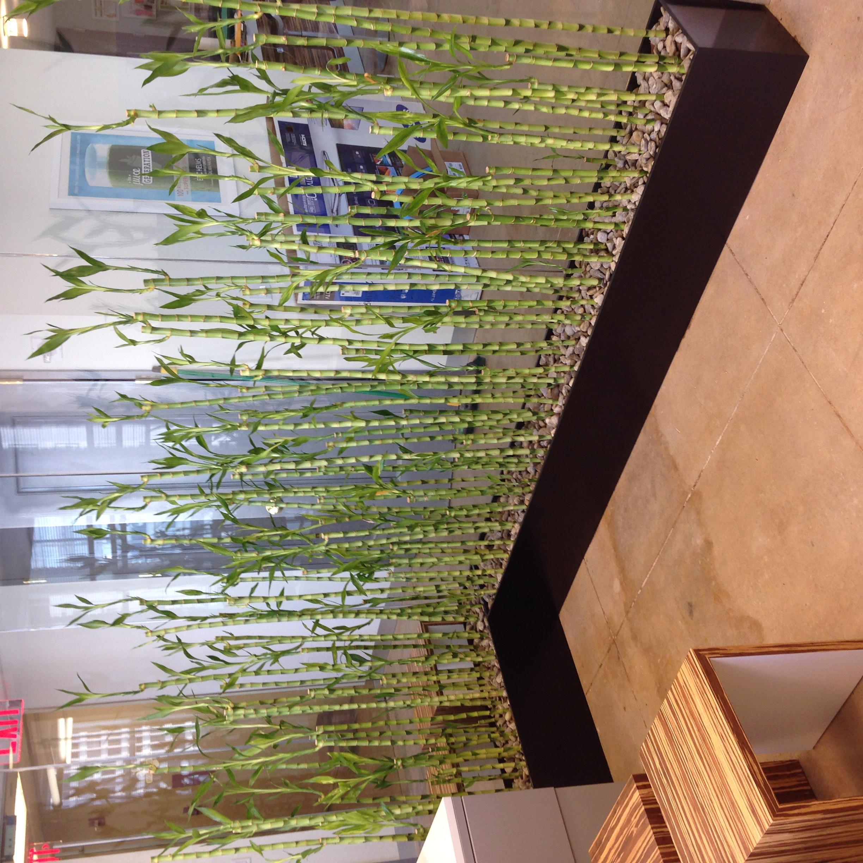 Custom office planters, Juice Generation NYC