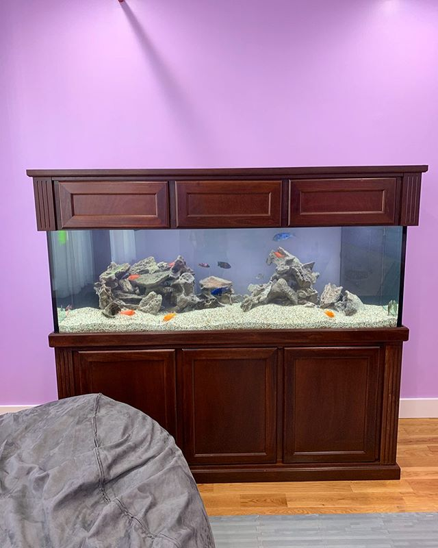 Dropped another big 180 African Chicklet tank behind this beanbag in the Boogie Down. Super excited to see how this one develops. . . . . . #african #cichlid #africancichlids #lake #malawi #lakemalawi #aquarium #plantedtank #bronx