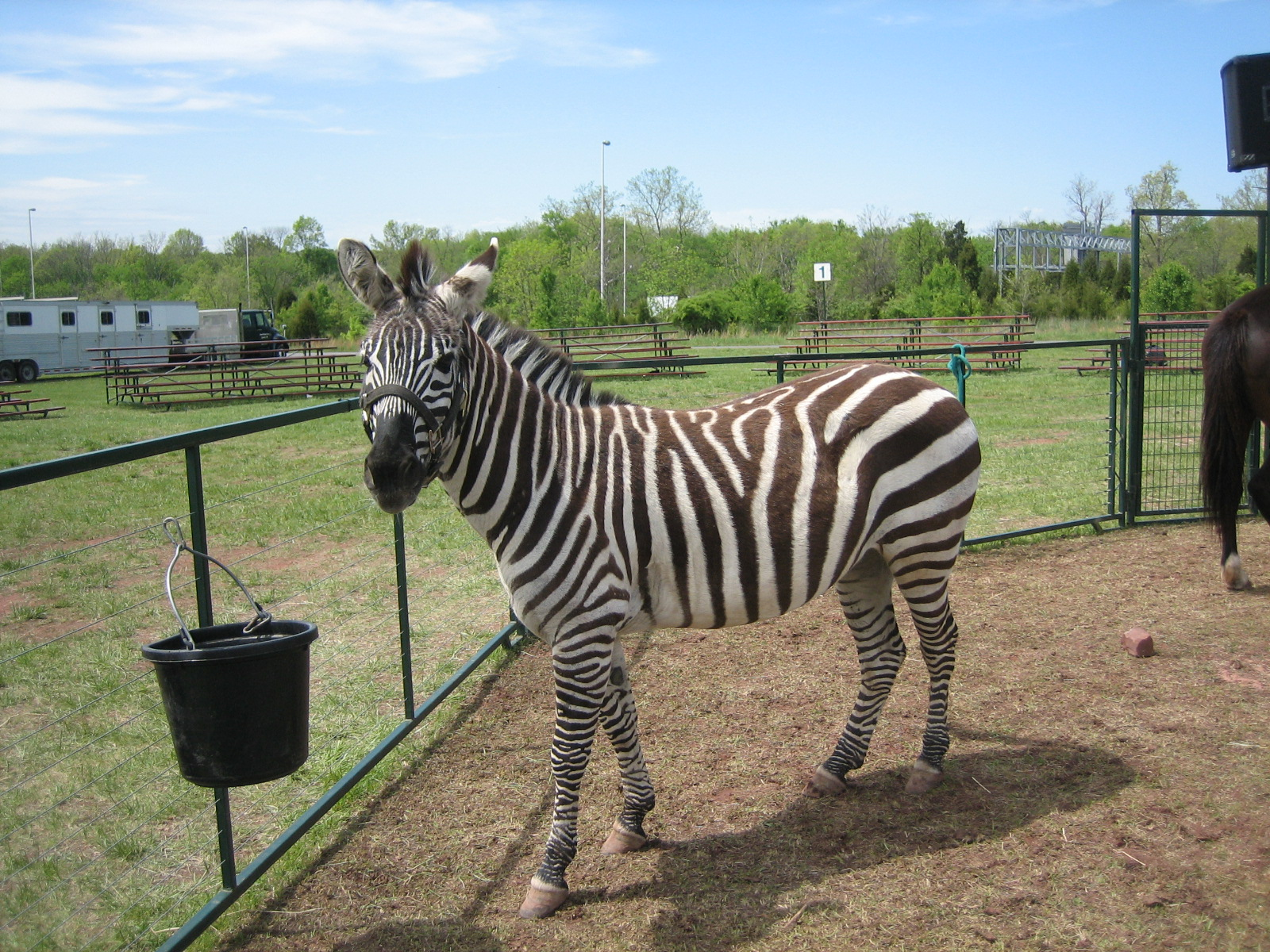 And even a zebra!