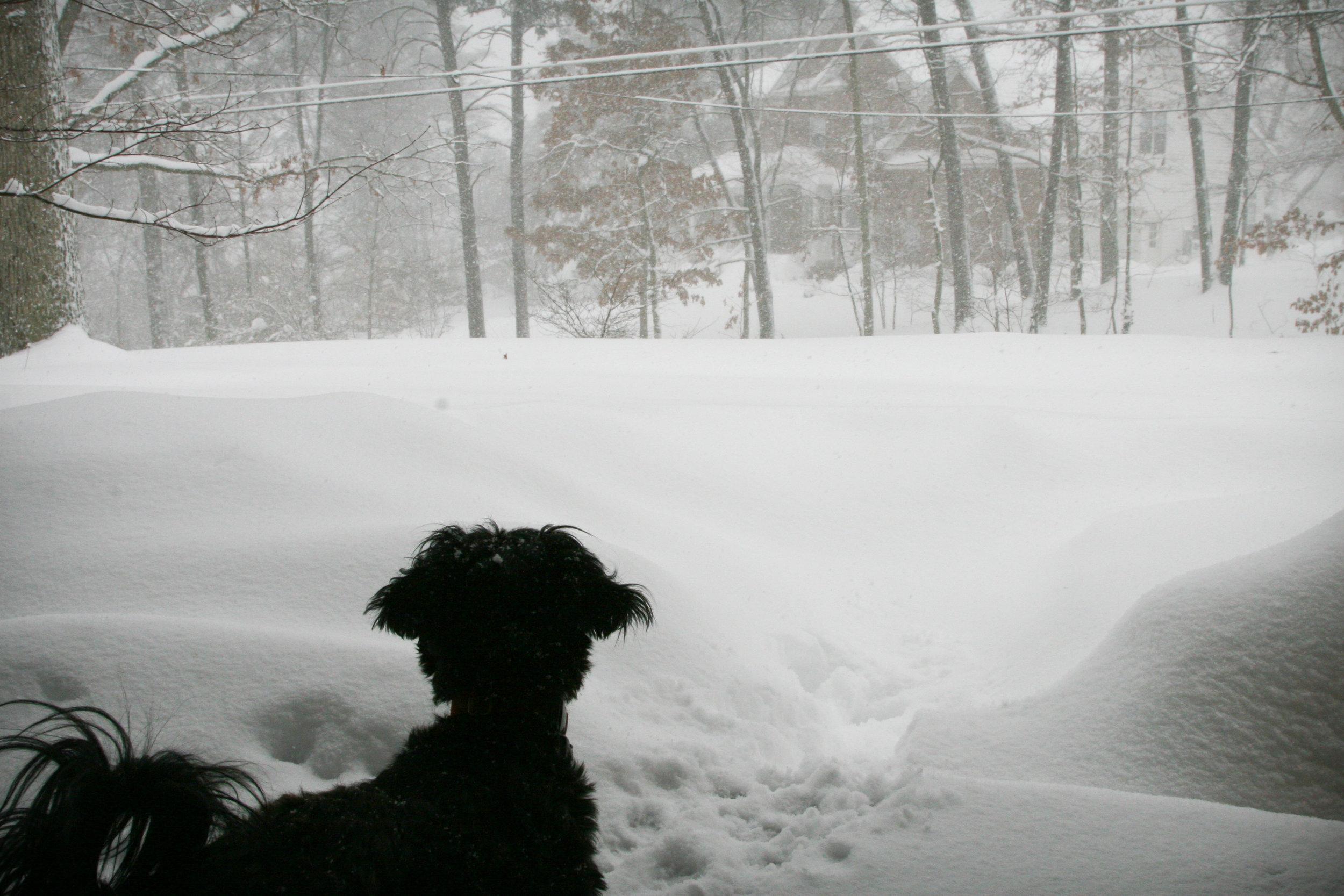 Snowpocolypse III - February 2010 - Annandale Virginia