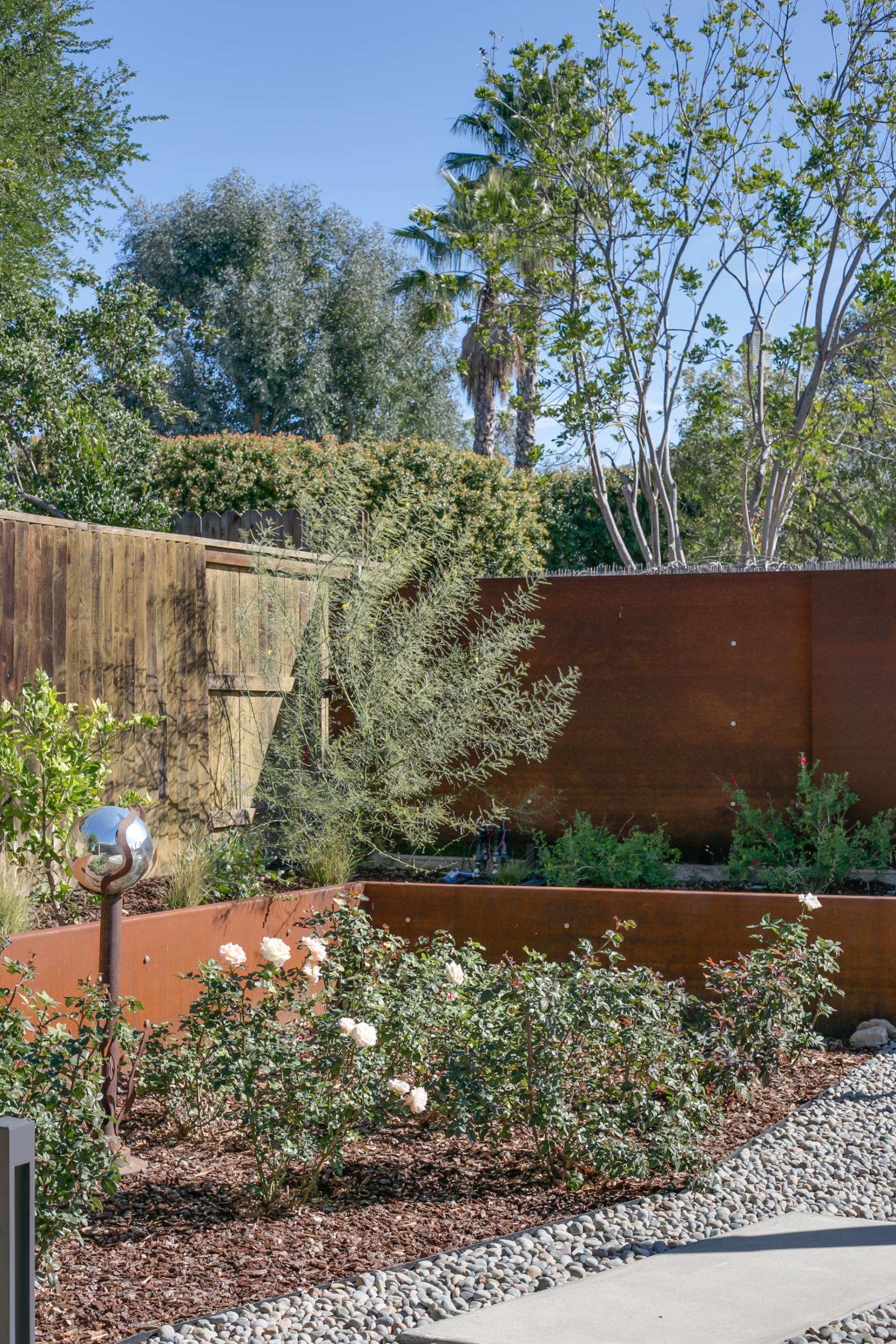 Mid-century modern backyard with rose garden, concrete pavers set in decorative stones as pathways as well as Corten steel planters and exterior wall