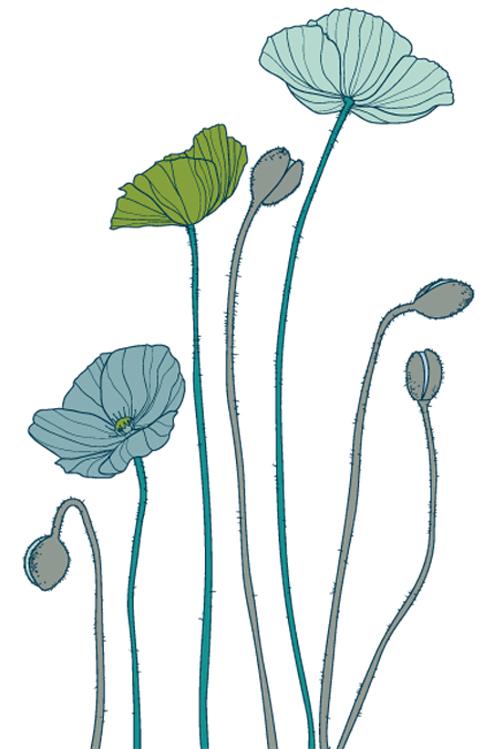 Poppies Illustration, 20oz