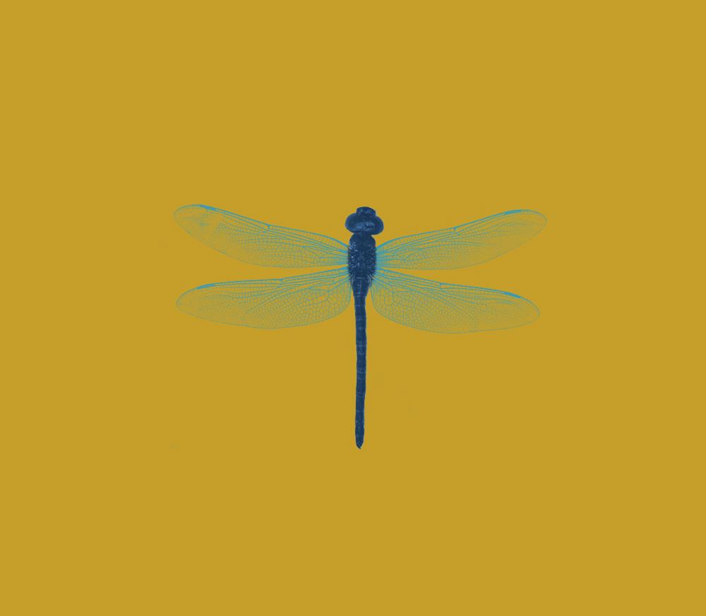 Dragonfly illustration detail, 20 oz. bottle.