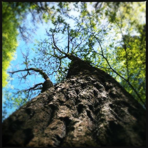 Forest_5.JPG