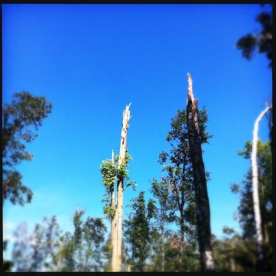 Forest_4.JPG
