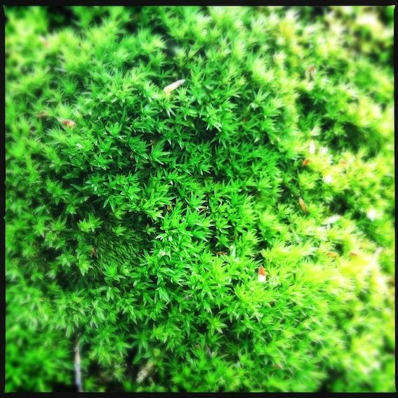 Forest_7.JPG