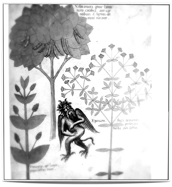 The herb Ypericon repelling a demon (15th century) - an example of annihilation by use of herbs.