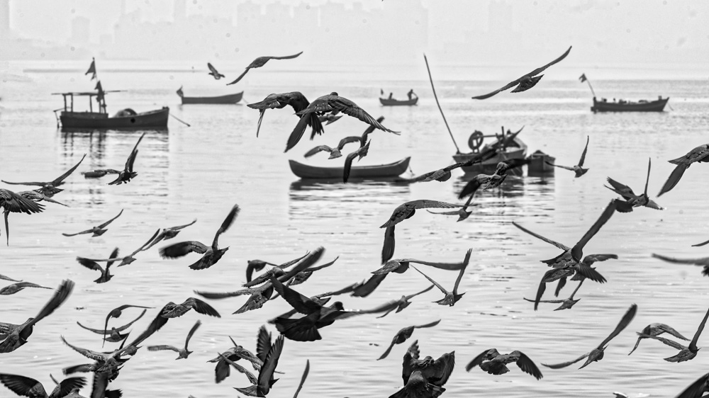 Doves at Chowpatty, Mumbai, India.