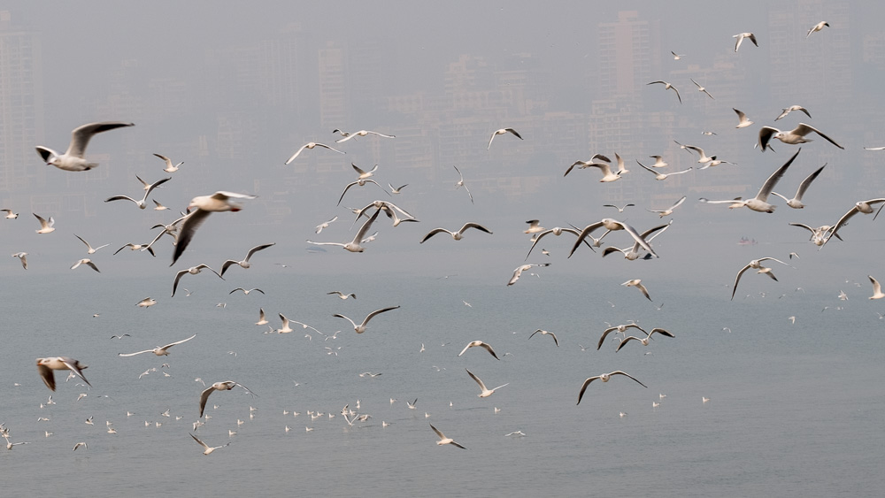 sea gulls at Marine Drive take three