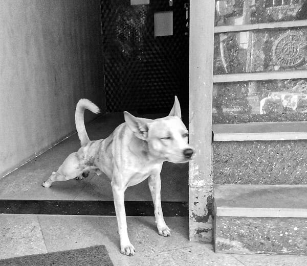street_Mumbai-6.jpg