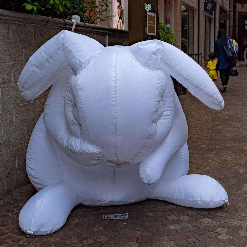 white rabbit_.jpg