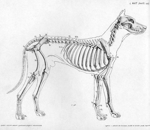 dog-skeleton.jpg
