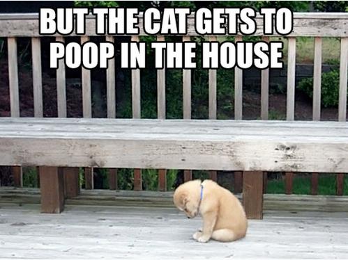 Poor little fella.