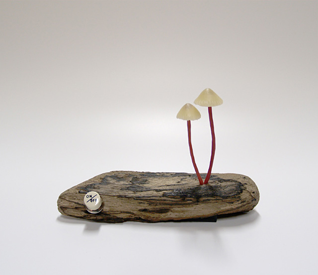 mushroom-7.jpg