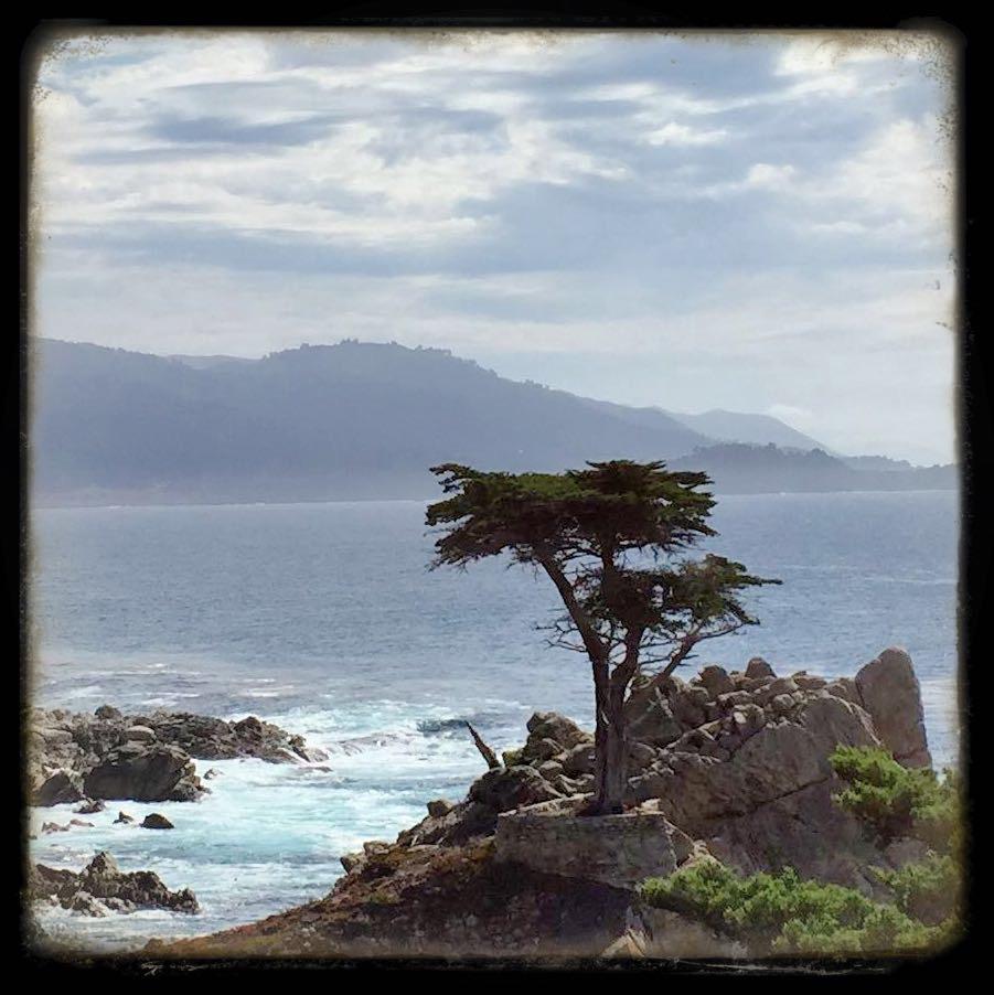 Lone Cypress - Pebble Beach