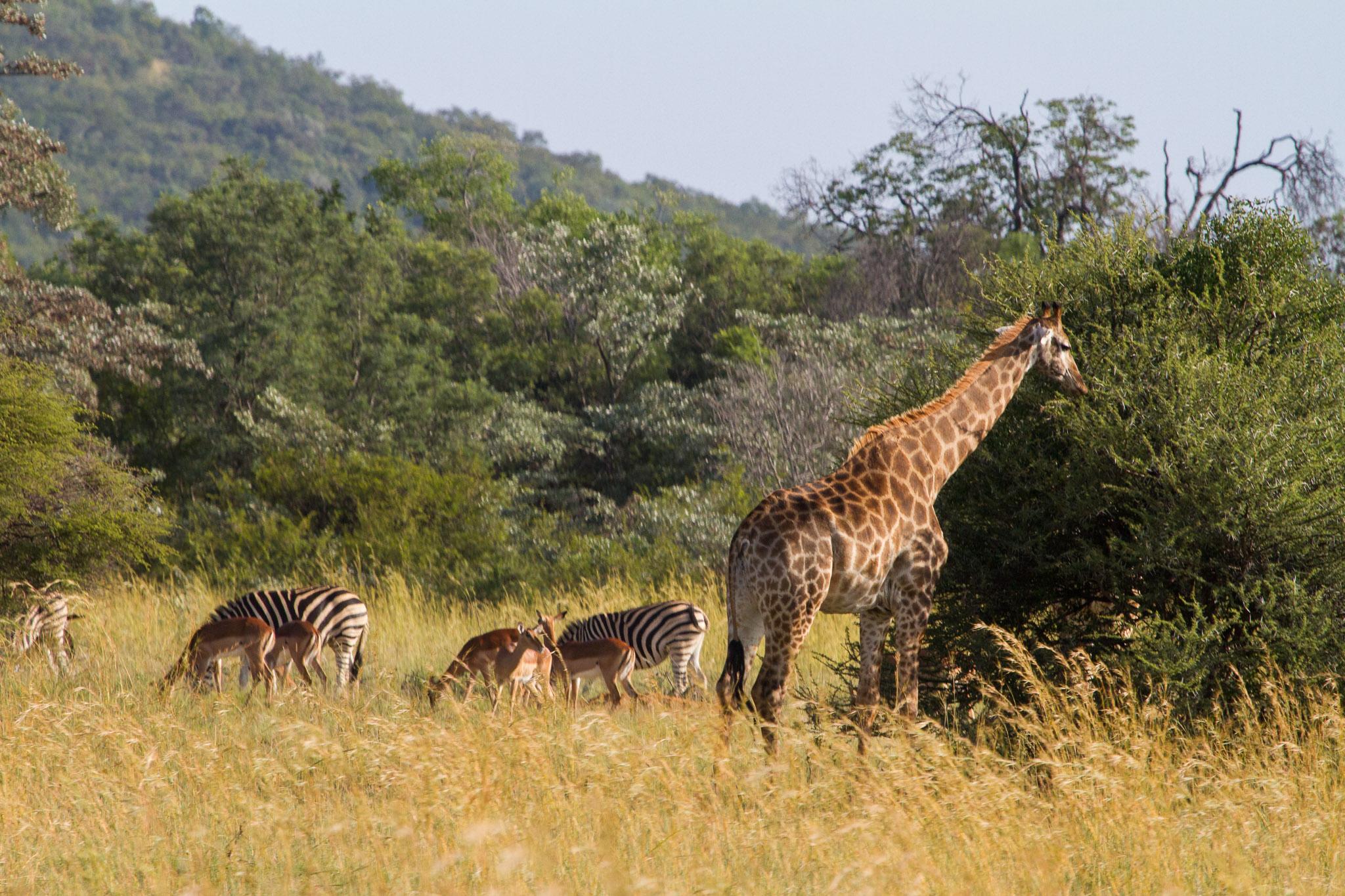 sabrams-south-africa-47.jpg