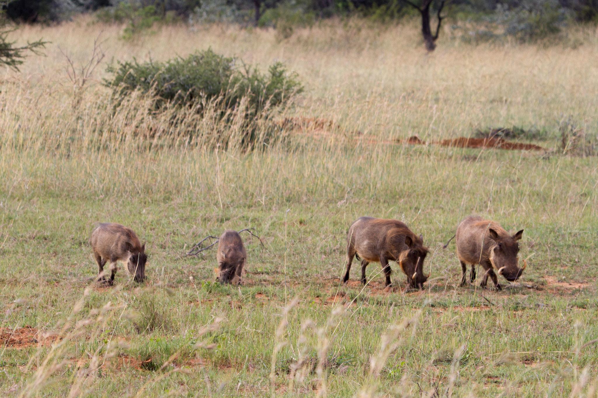 sabrams-south-africa-61.jpg