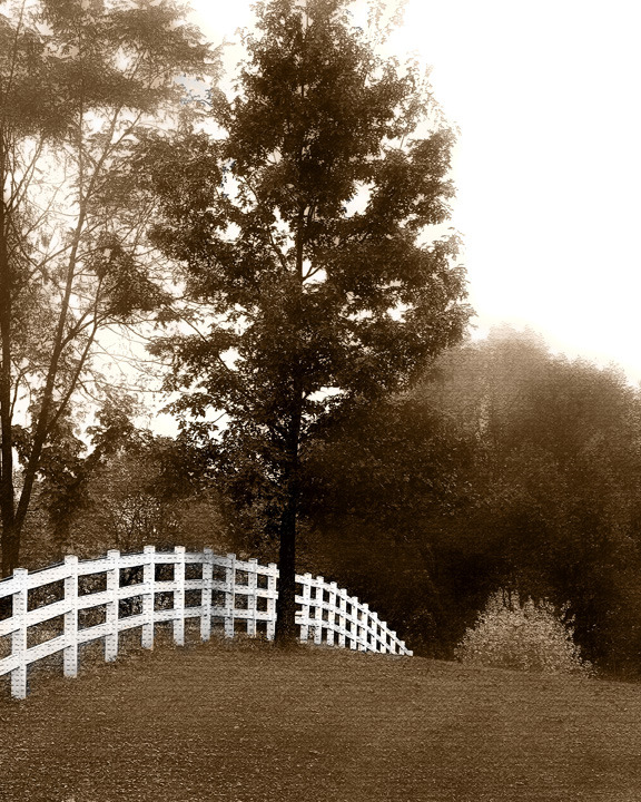 fence with tree.jpg
