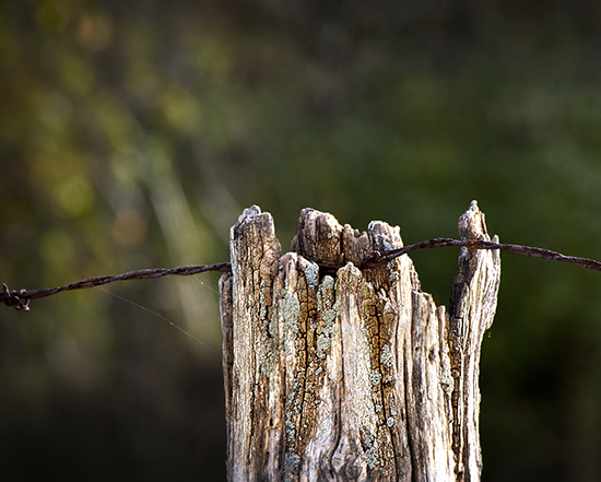11 6 cooked fence with barbed wire.jpg