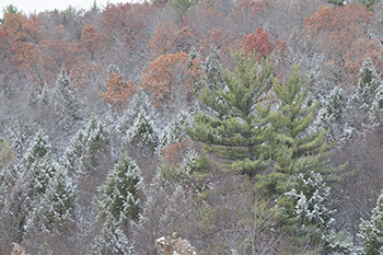 11 13 raw colorful trees in PA.jpg