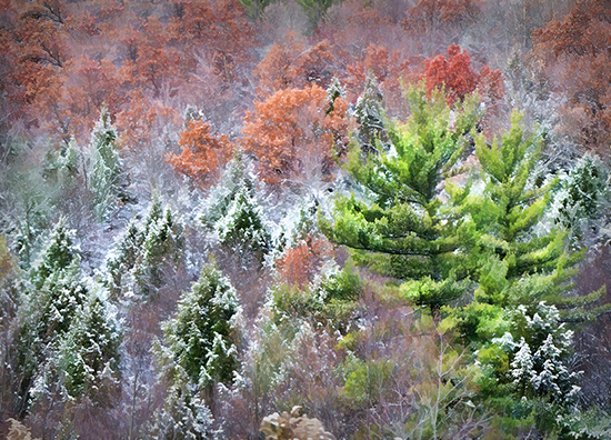 11 13 cooked colorful trees in PA.jpg