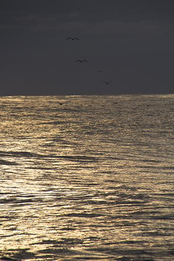 11 19 raw ocean with sea gulls.jpg