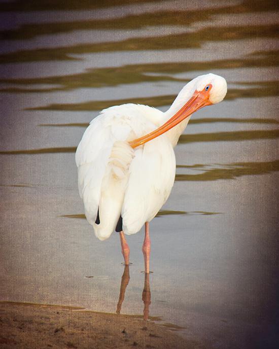 11 25 cooked pelican.jpg