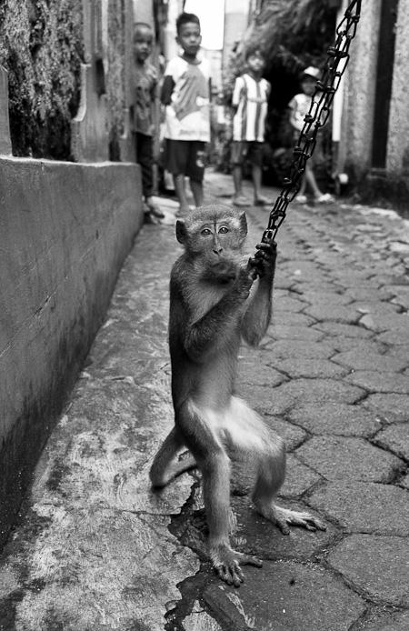 Monkey, Lenteng Agung, Jakarta, July 2014
