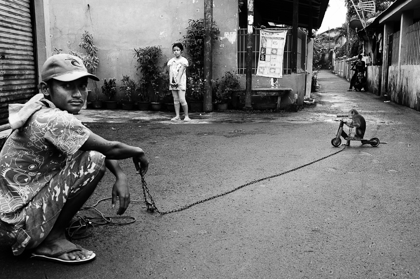 Monyet, Jakarta Selatan