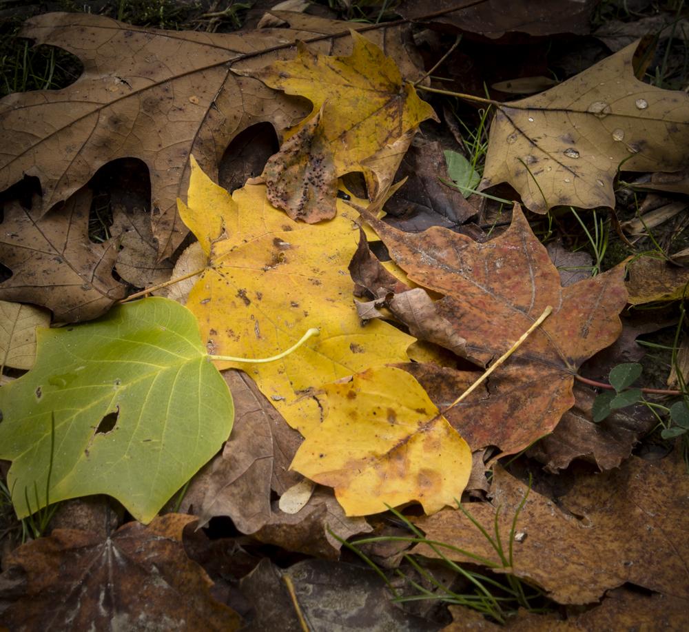 abk_leaves_gb.jpg