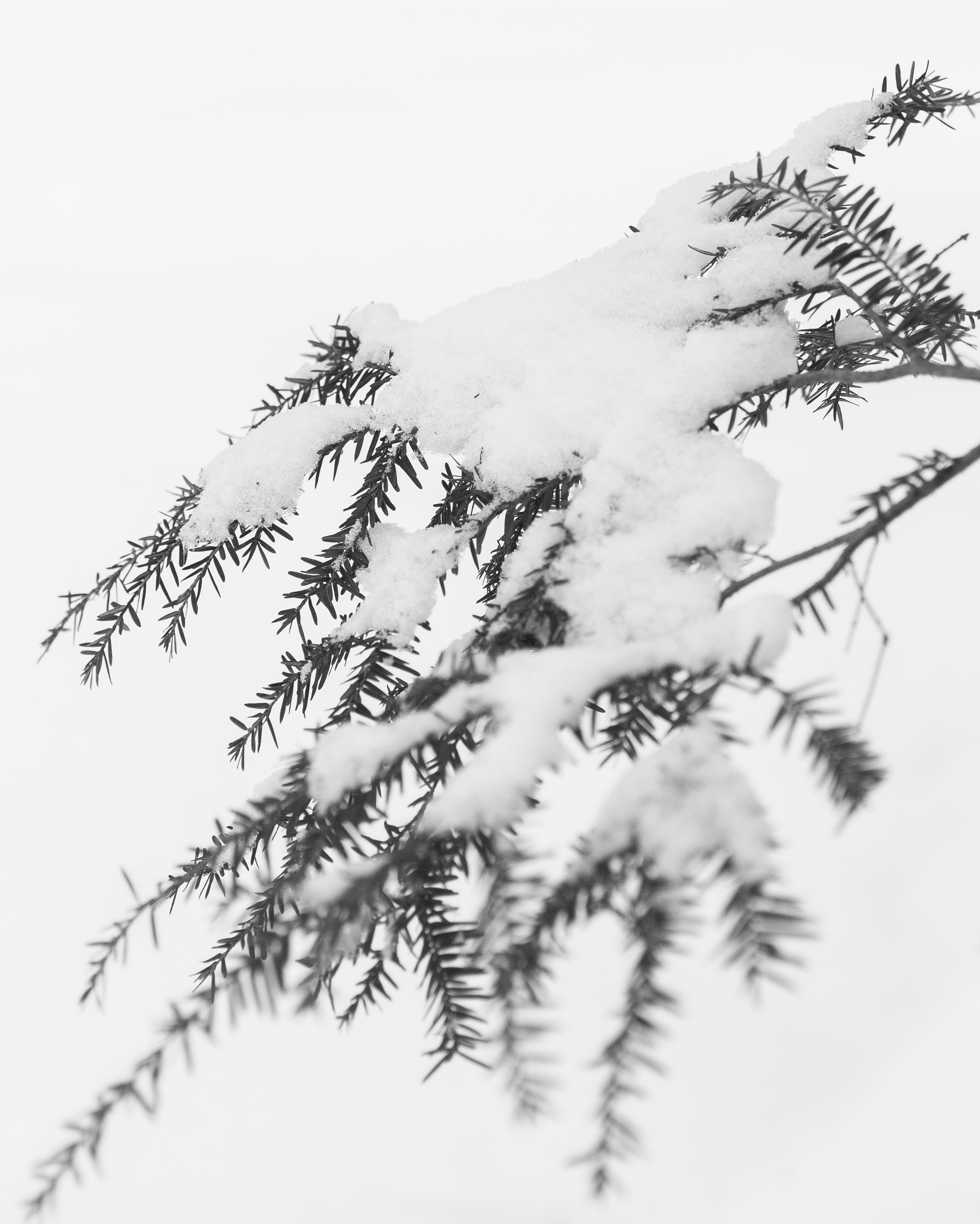 winter-.jpg