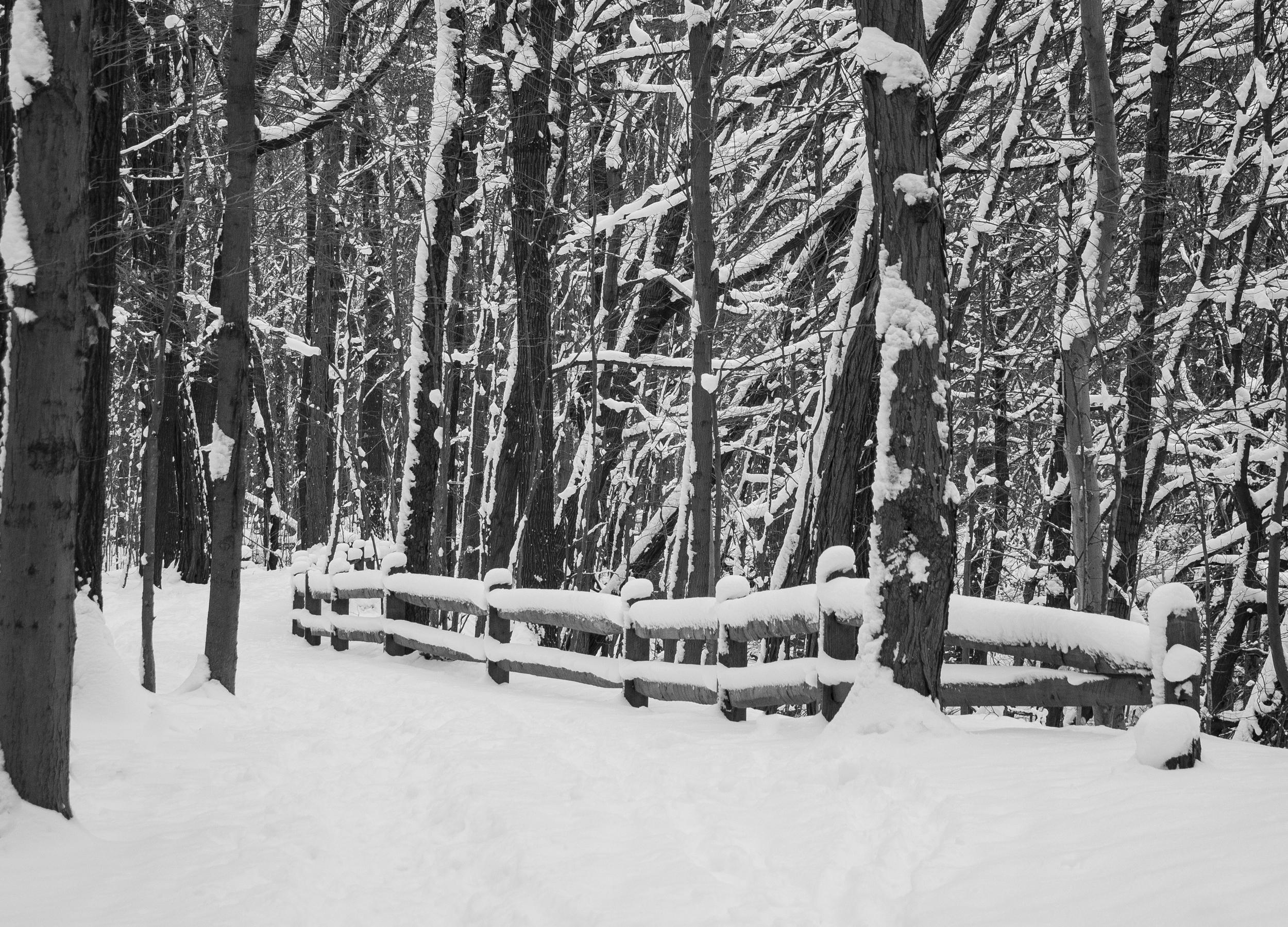 winter-5544.jpg