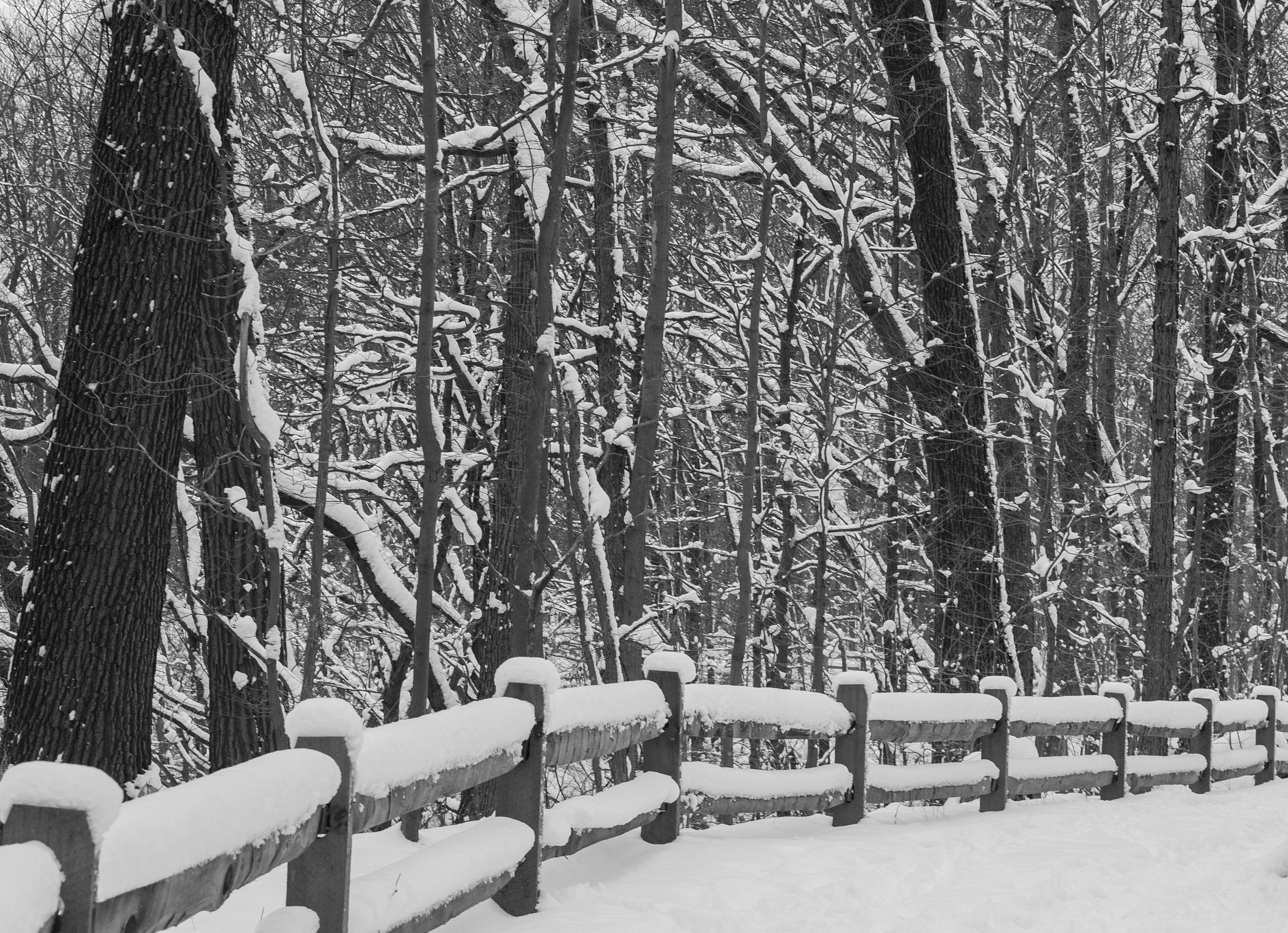 winter-5607.jpg