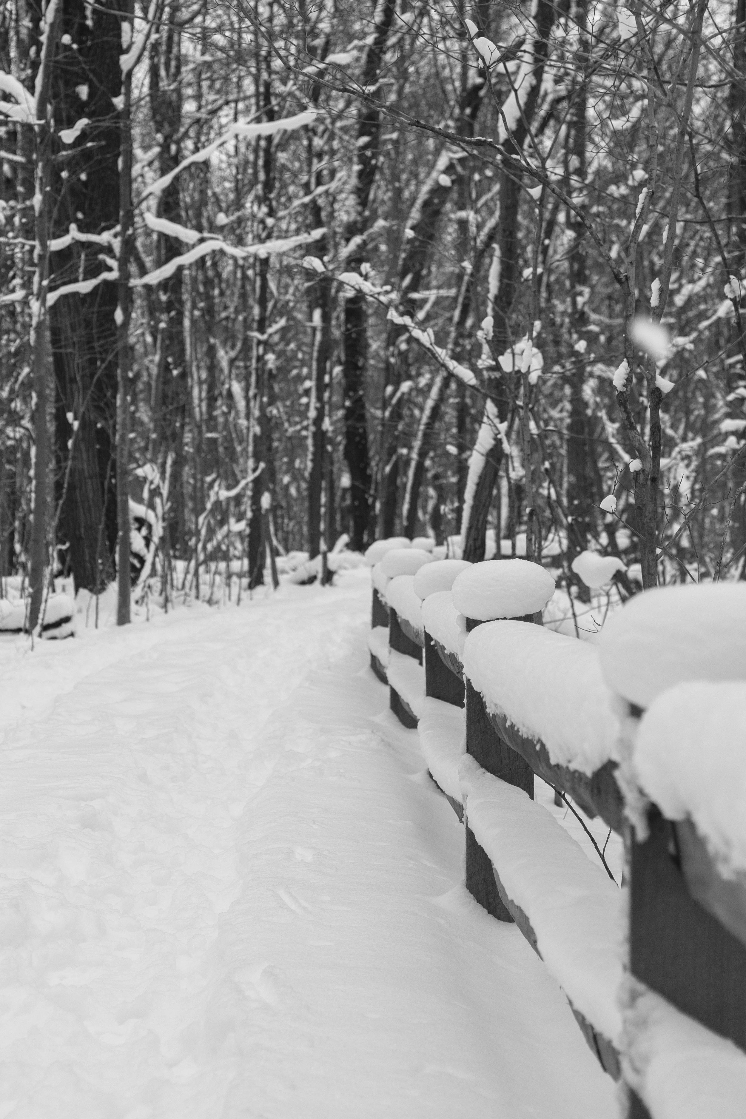 winter-5611.jpg