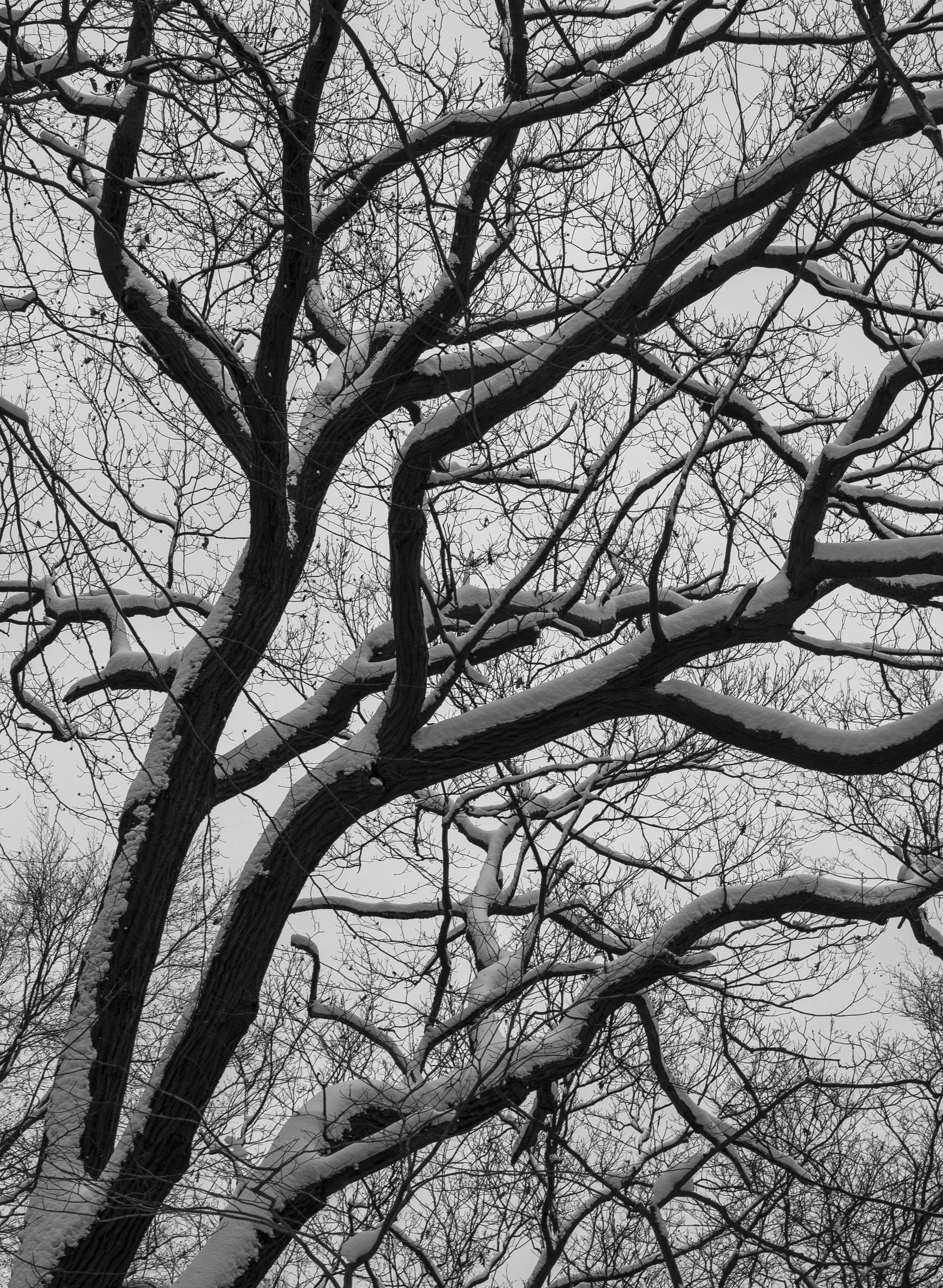 winter-5604.jpg