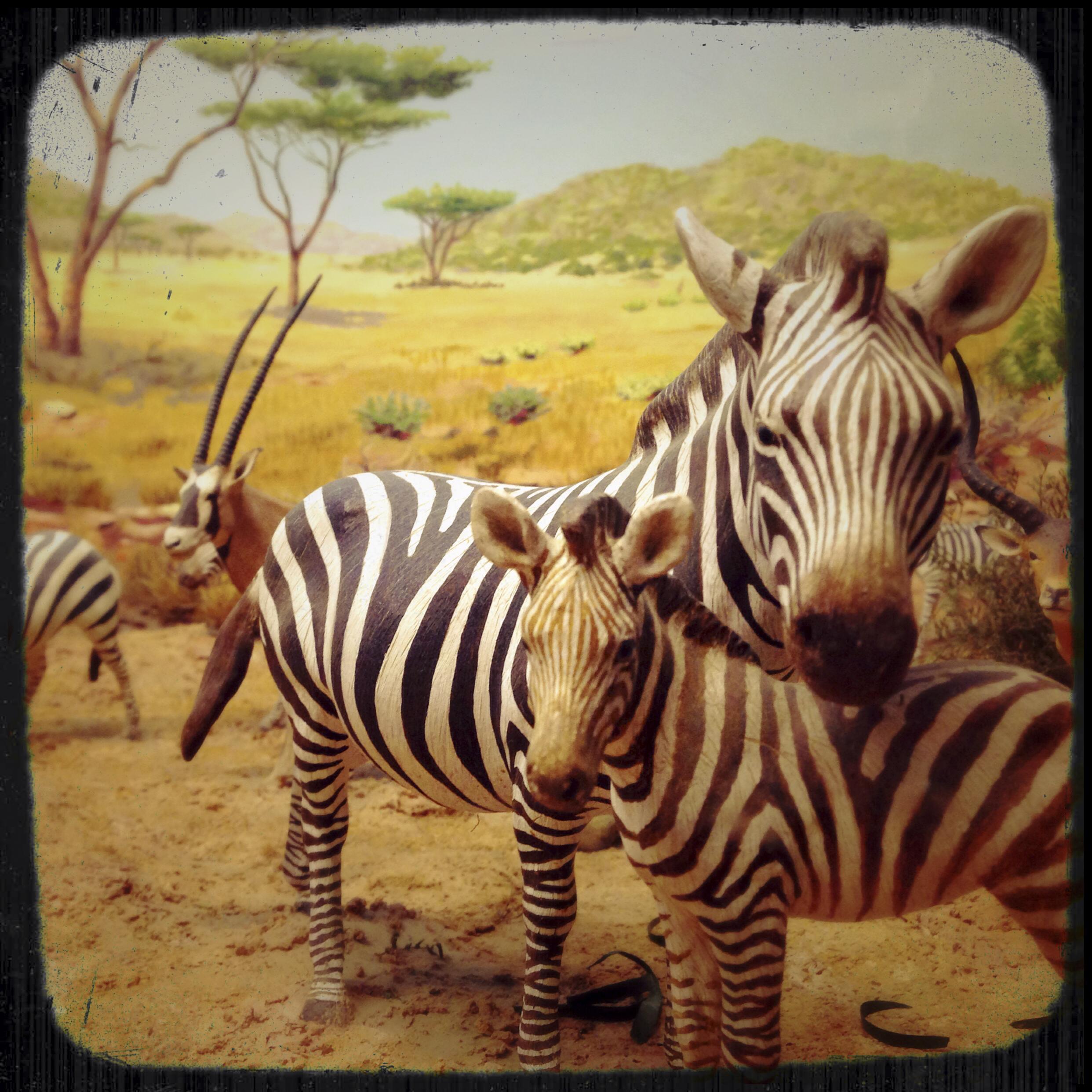 Natural History Museum-0185.jpg