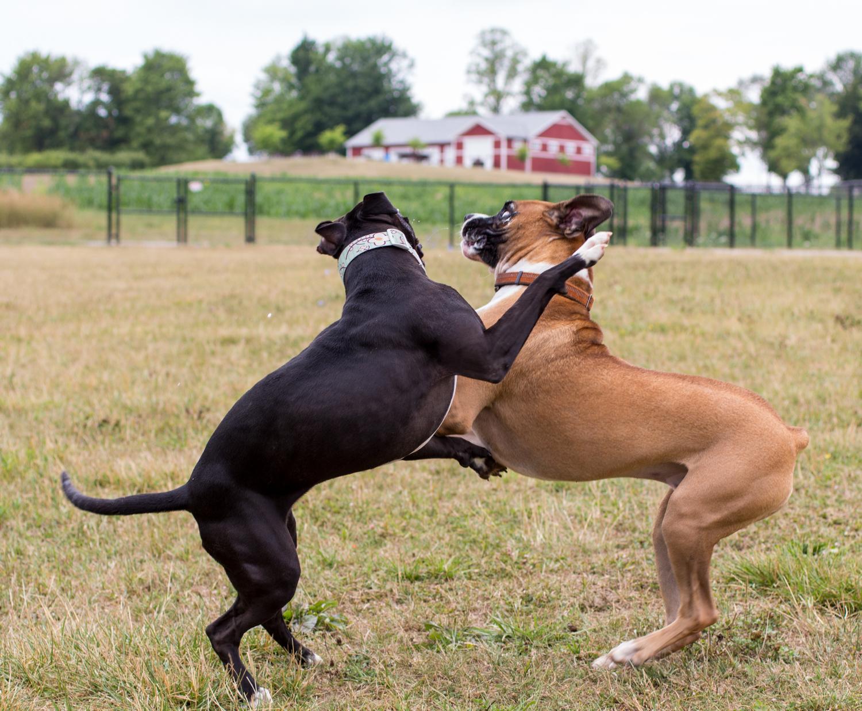 Canine Meadows-1.jpg
