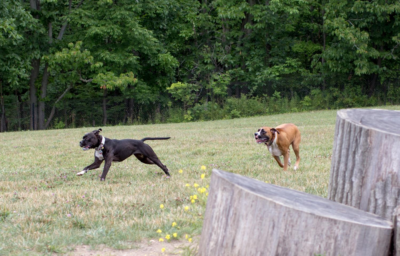 Canine Meadows-3.jpg