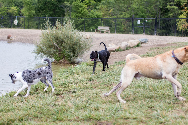 Canine Meadows-6.jpg