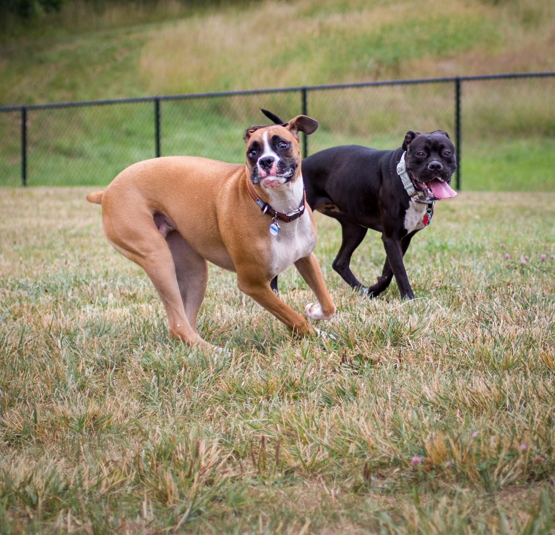Canine Meadows-5.jpg