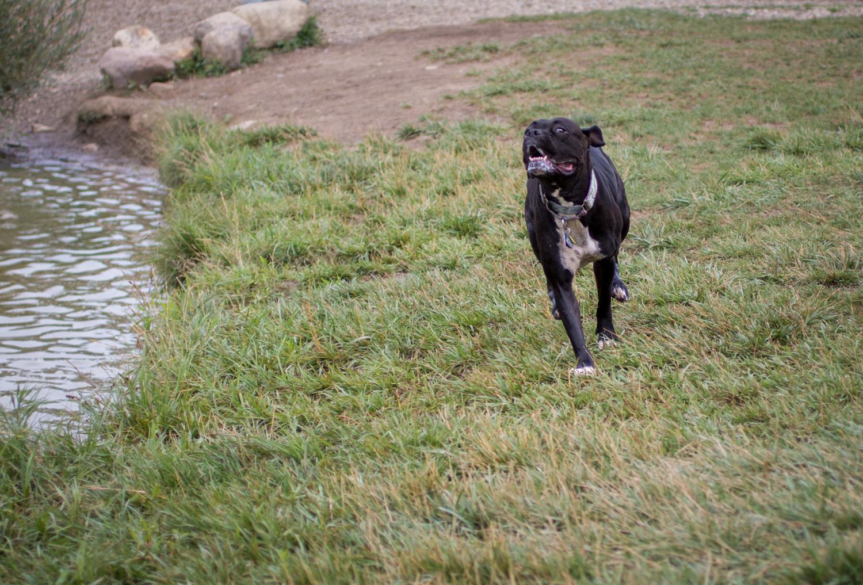 Canine Meadows-7.jpg